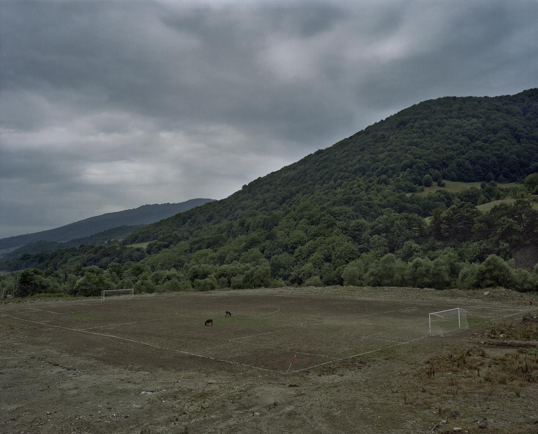 Donkeys eating grass on the soccer field.
